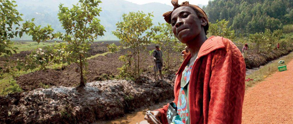 wald Ruanda