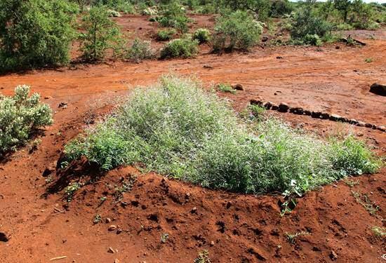 Regen sammeln und das Wasser nutzen