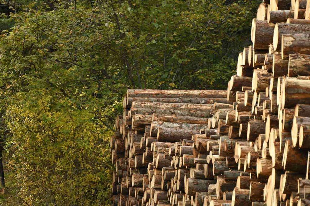 Stapel von Holzstämmen im Wald