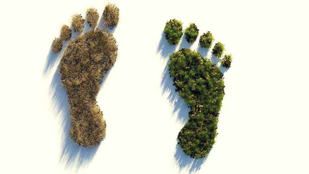 Zwei Fußabdrücke dein einmal einen vertrockneten Wald und einem einen gesunden, grünen Wald zeigen und damit den Carbon Footprint symbolisieren.
